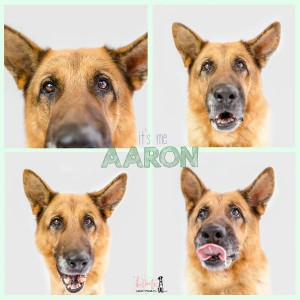 Aaron Collage