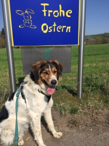 Frohe Ostern 20